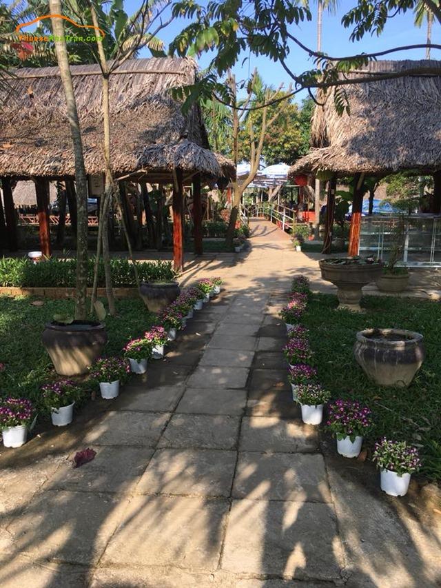 vườn chuối ở đà nẵng