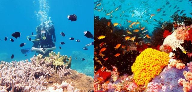 lặn ngắm san hô cồn cỏ